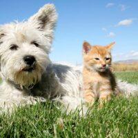 bigstock-Cat-And-Dog-4597724.jpg